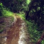 Flooded-Austin-Barton-Creek-Trail