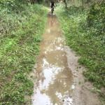 Austin-Flooded-Trail