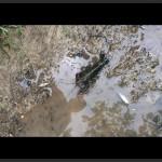 Crawfish-on-trail